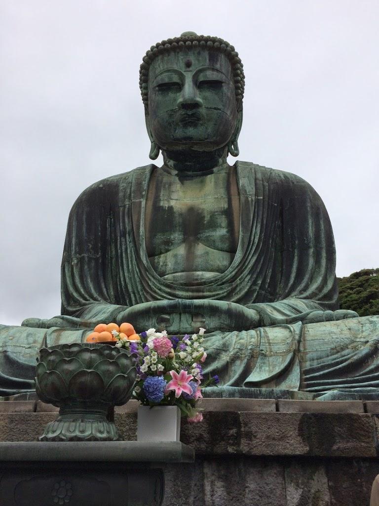 Hydrangea Kamakura