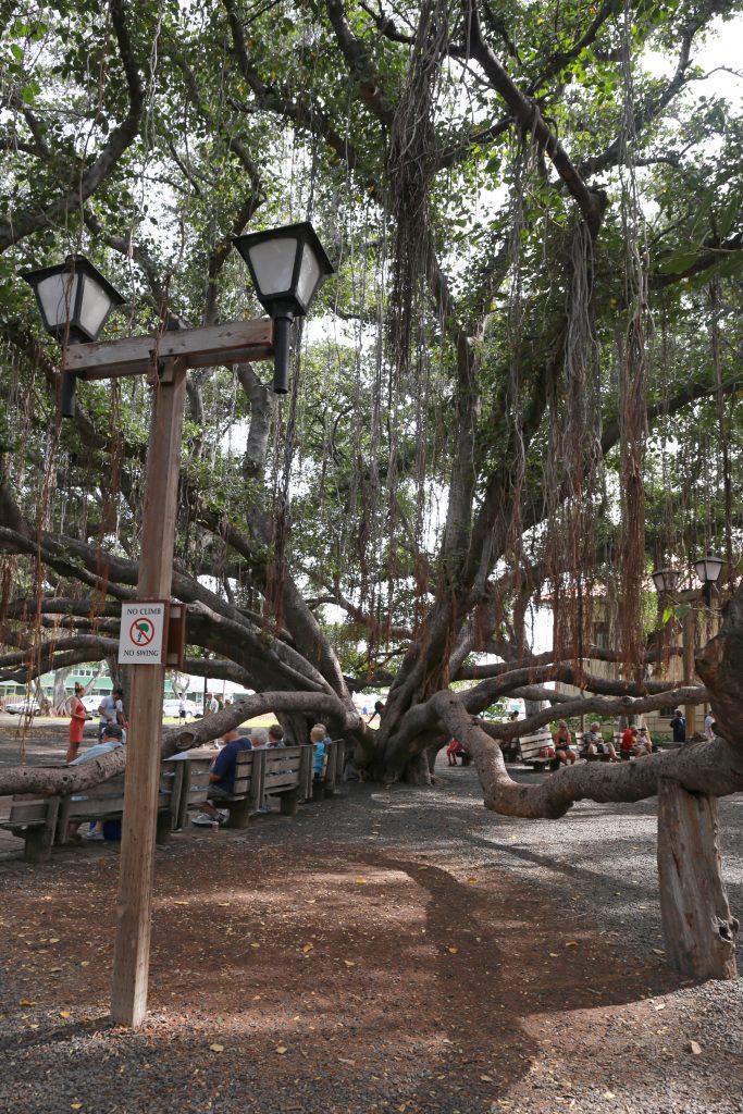 Banyan tree ark