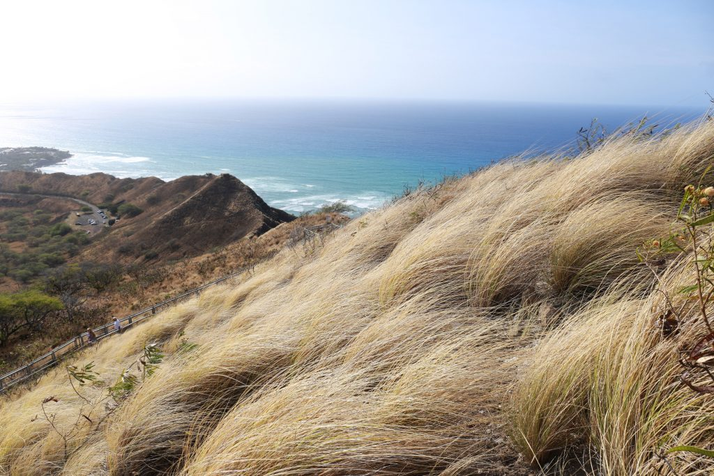 Diamond Head grasses