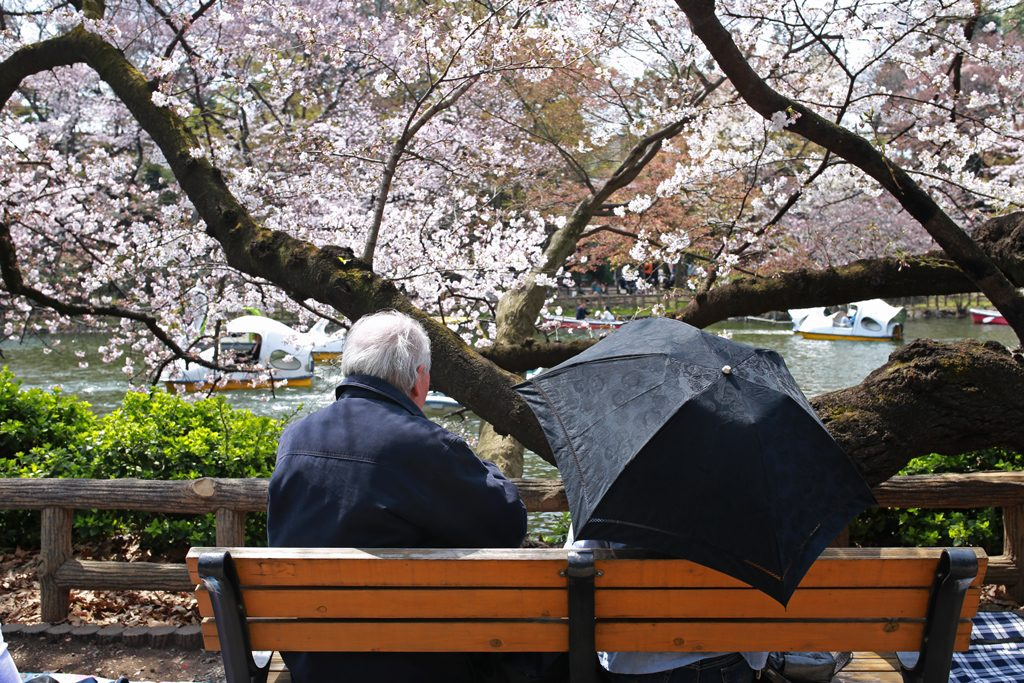 Sakura at Inokashira Park