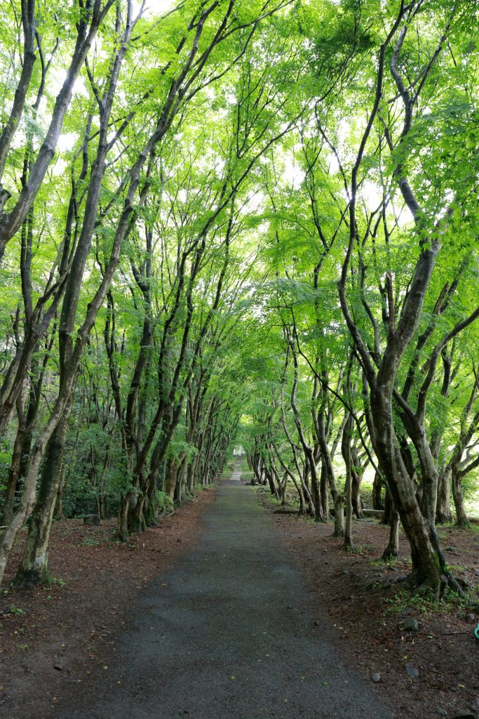 Inside Kawachi Fuji Garden