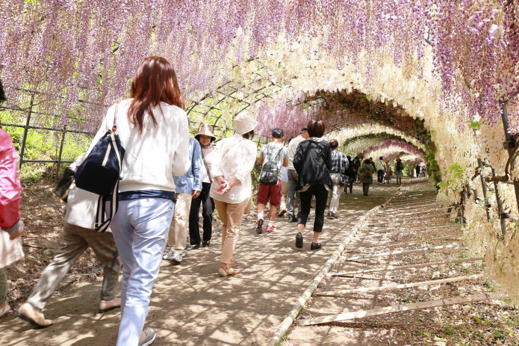 Kawachi Fuji Garden in Spring