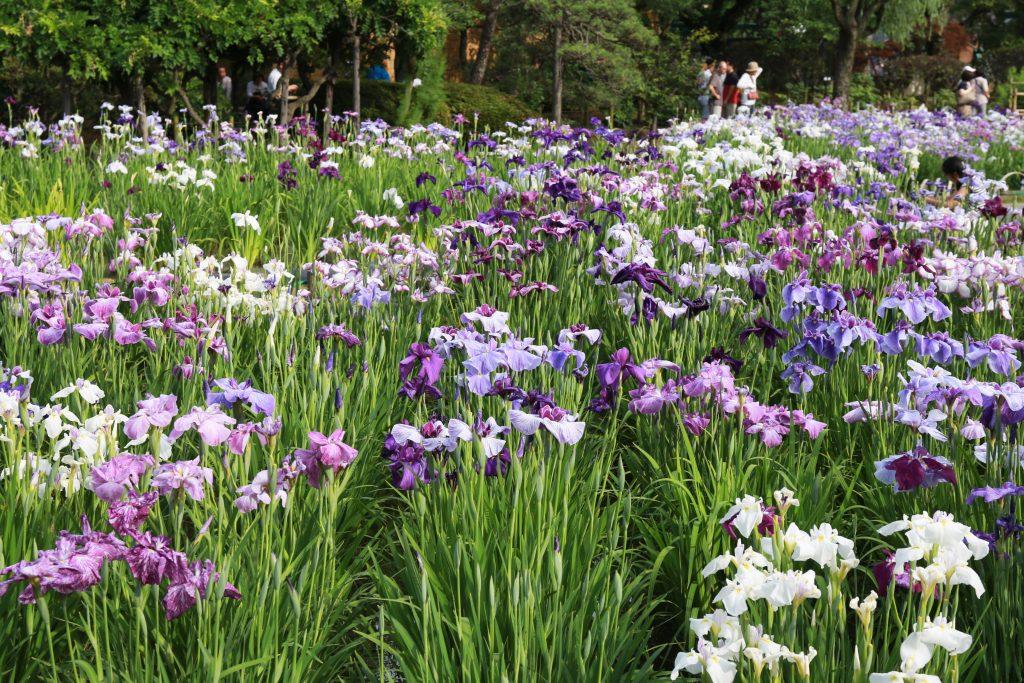 Iris Garden Tokyo