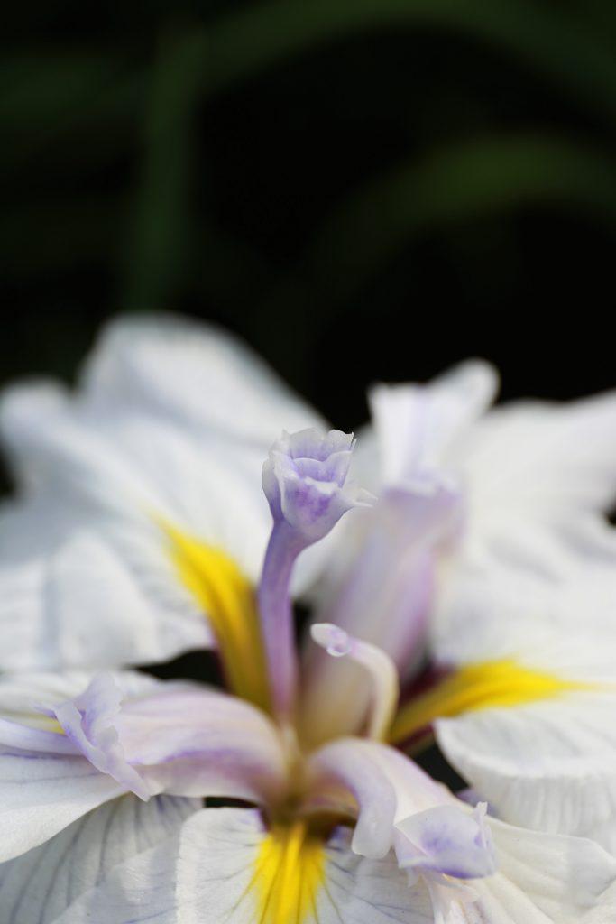 Iris core
