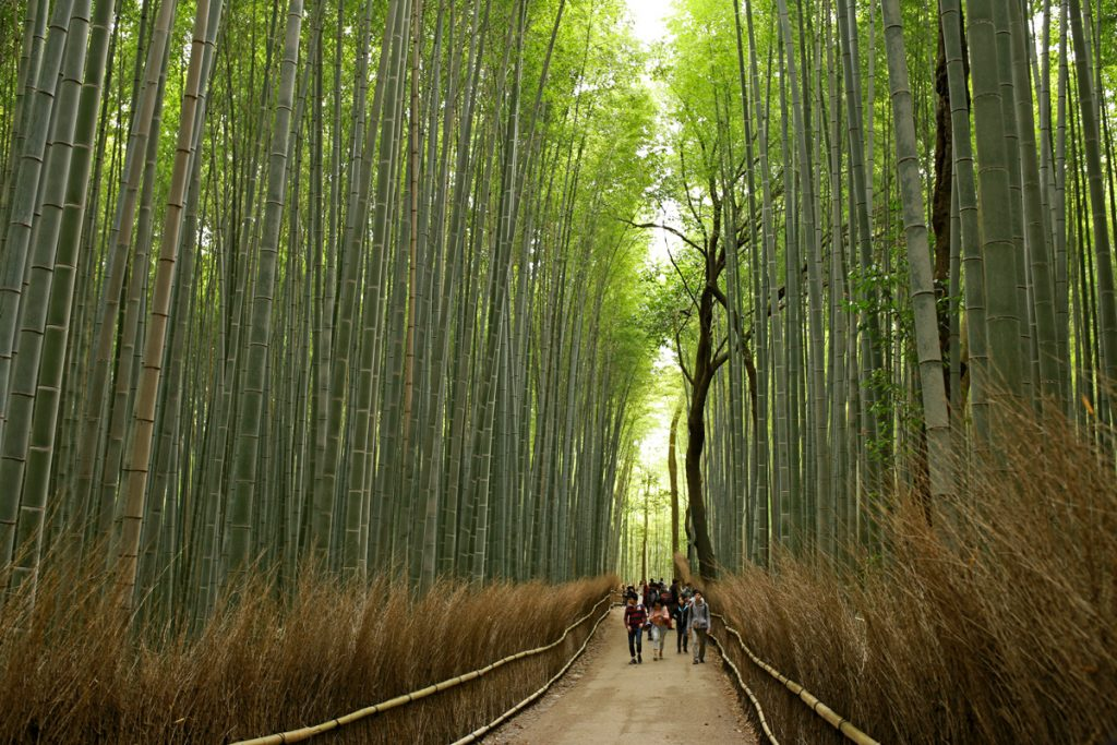 5 Things to Do in Arashiyama Kyoto  TiptoeingWorld