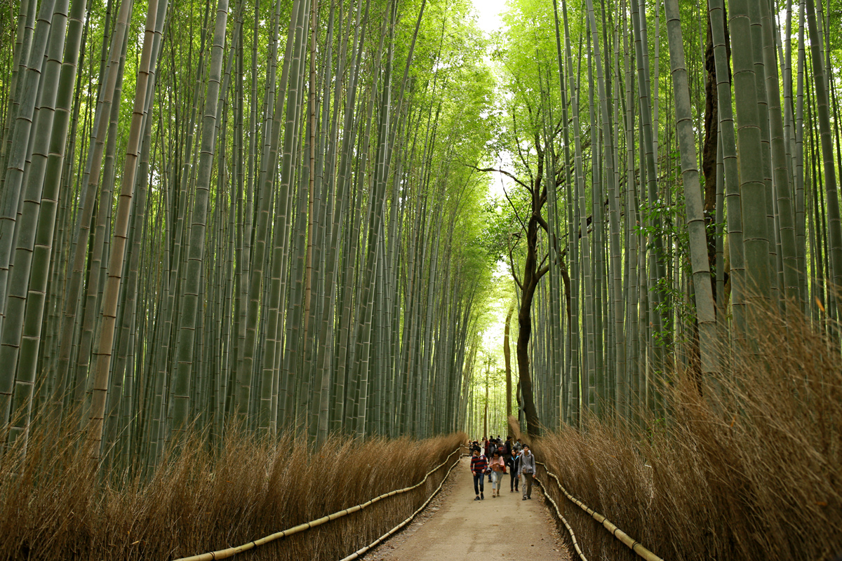 Bamboo Groves Kyoto