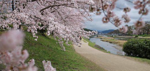 Kamogawa-River
