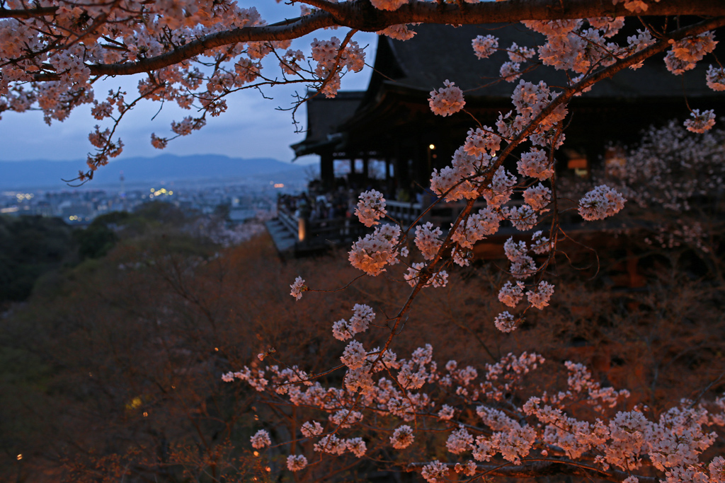 Spring Evening Light-up at Kiyomizu-dera Temple