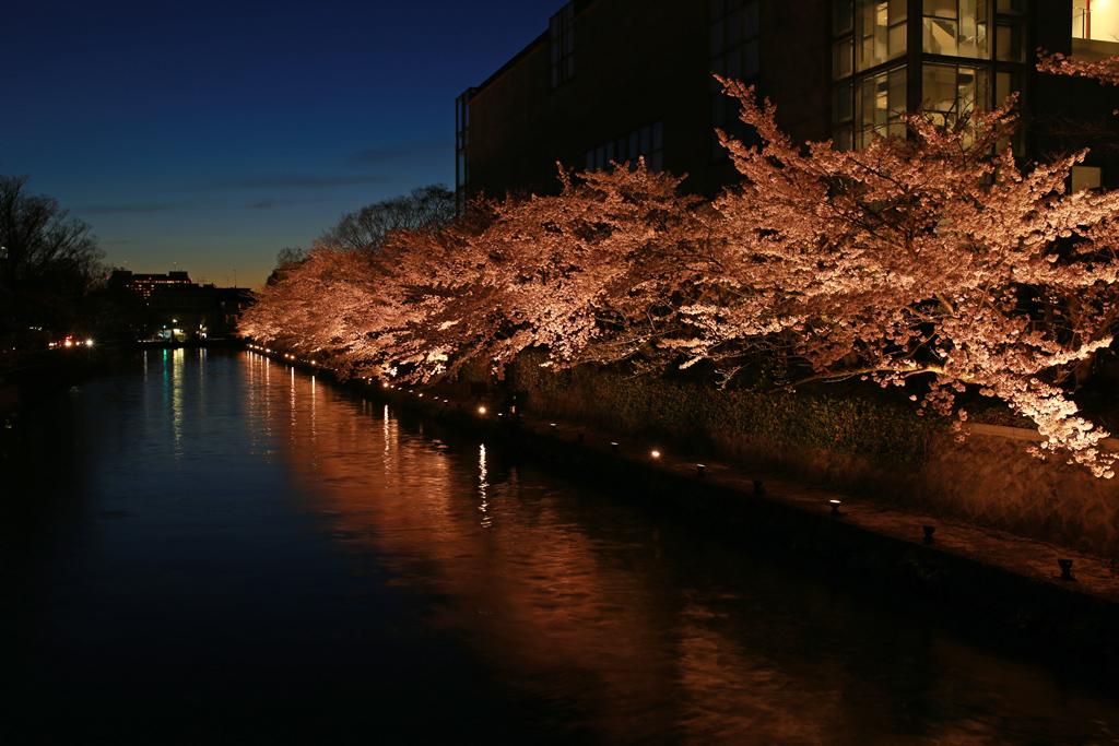 Cherry Blossoms on Okazaki Canal