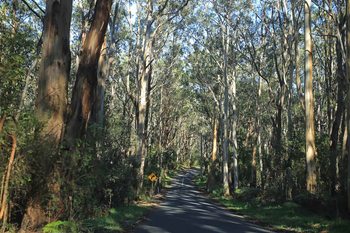 Road-to-Cape-Otway