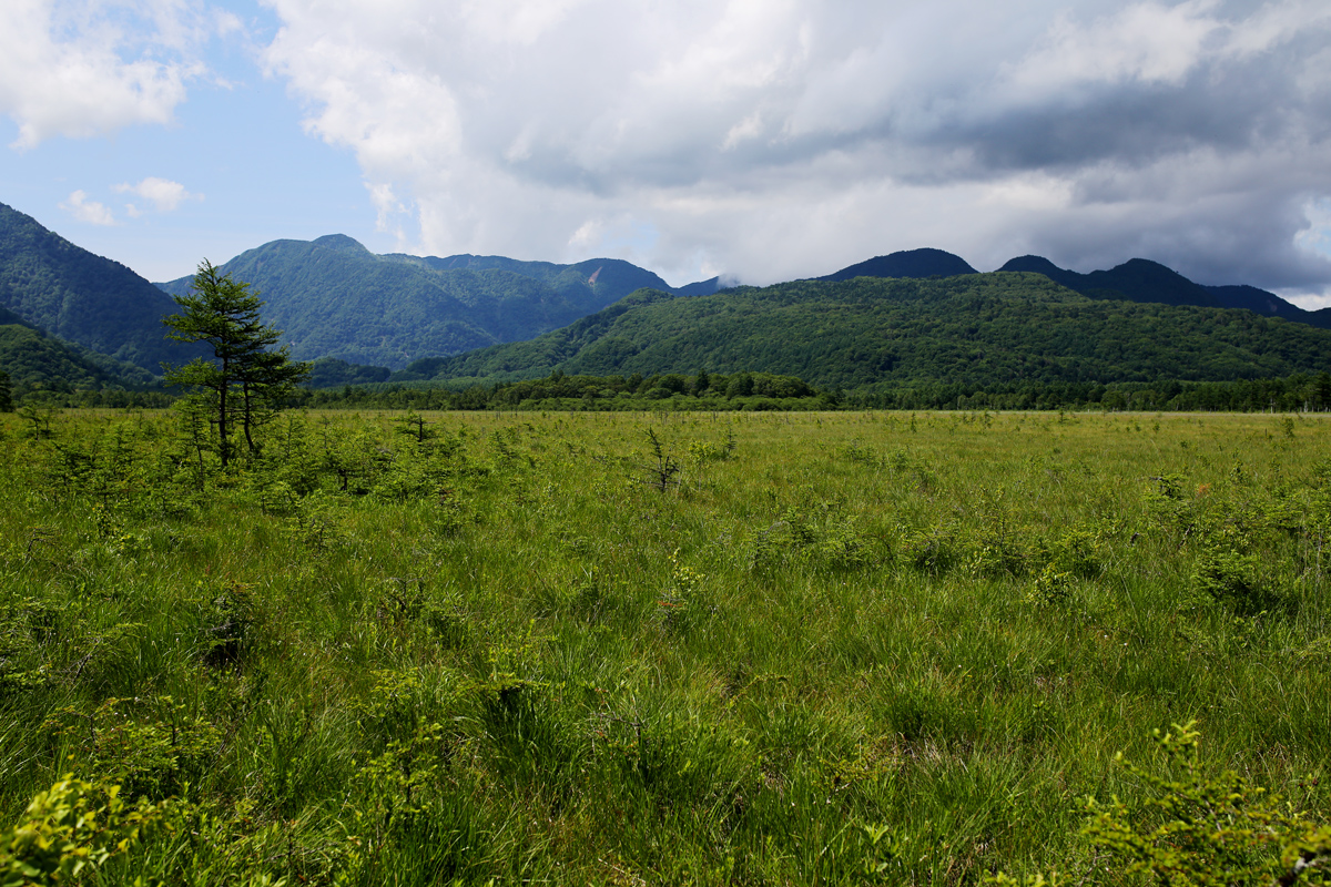 Senjogahara Marshland