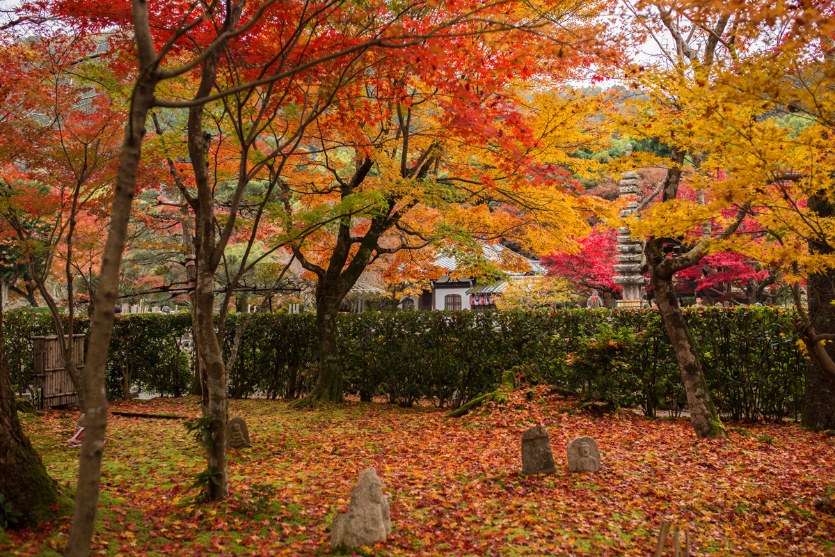 Adashino Nenbutsu-ji in Autumn