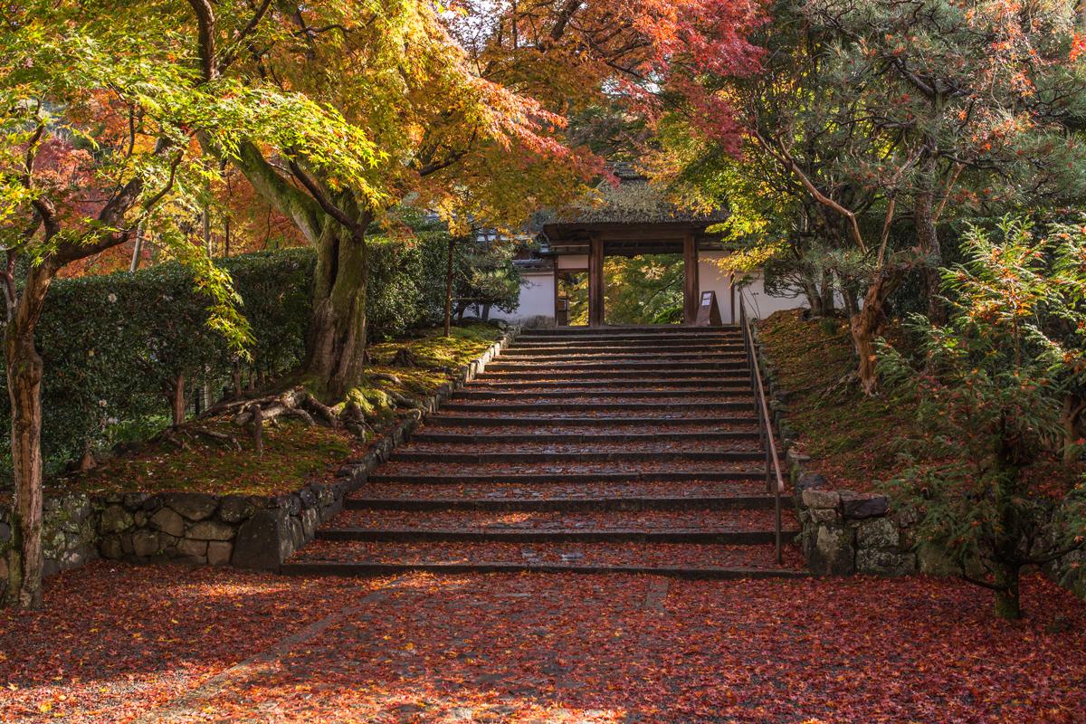 Autumn Foliage in Kyoto: Anraku-ji Temple