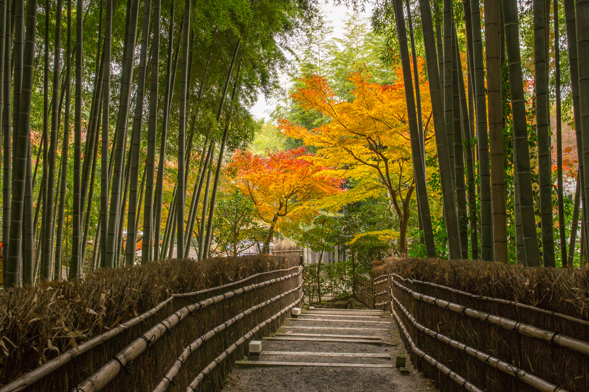 bamboo-forest-and-autumn-foliage