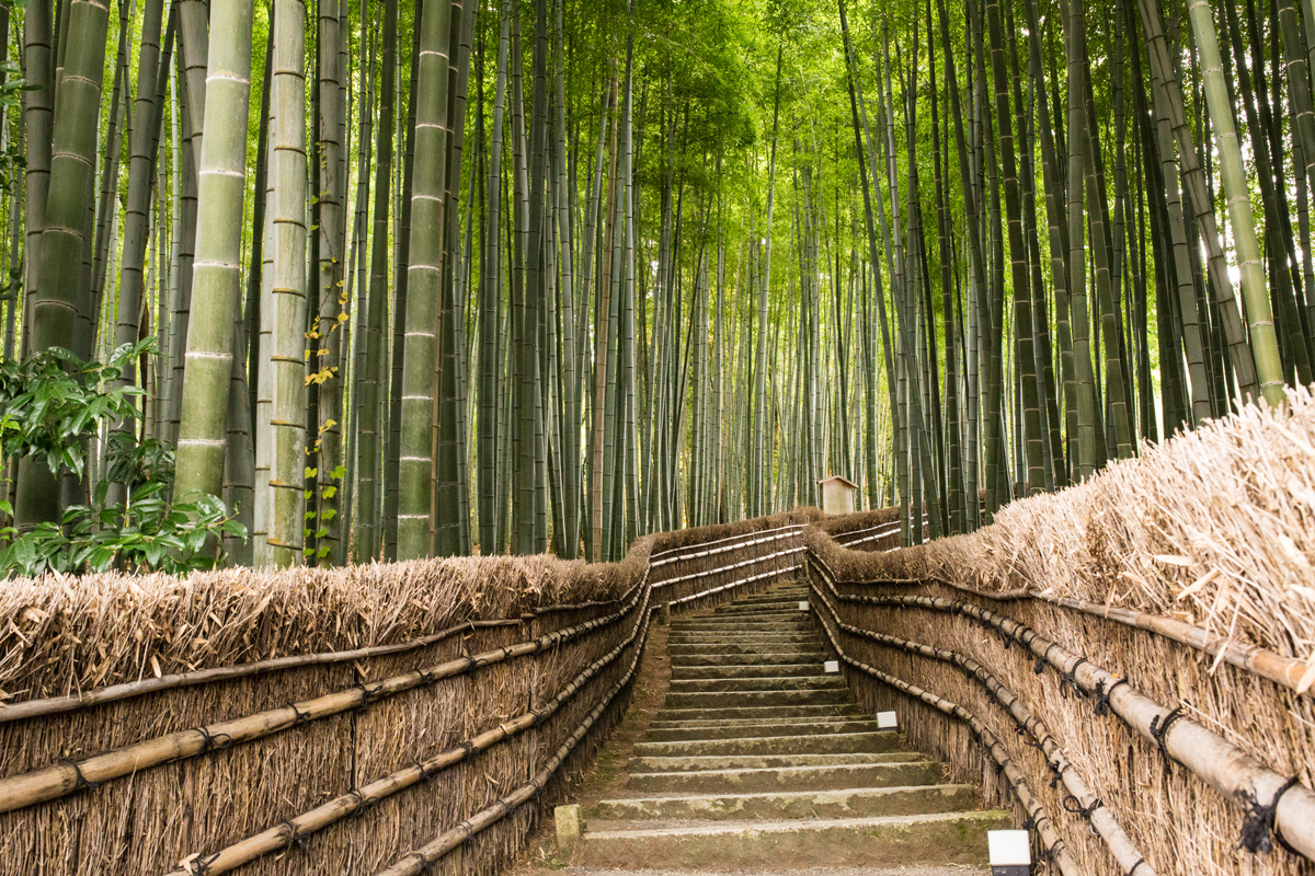 Bamboo Grove with Stairs Kyoto