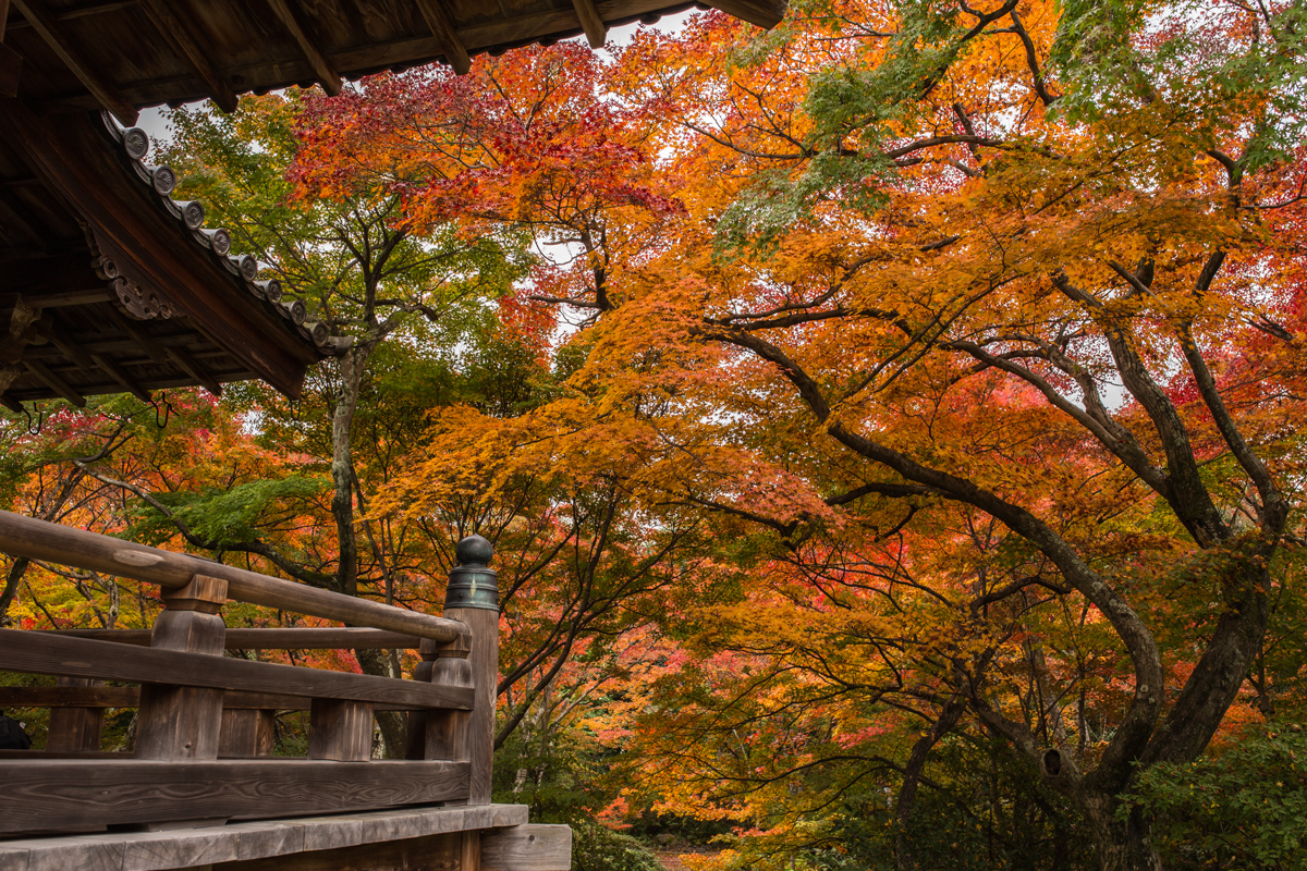 Autumn Foliage in Kyoto: Hokyo-in Temple