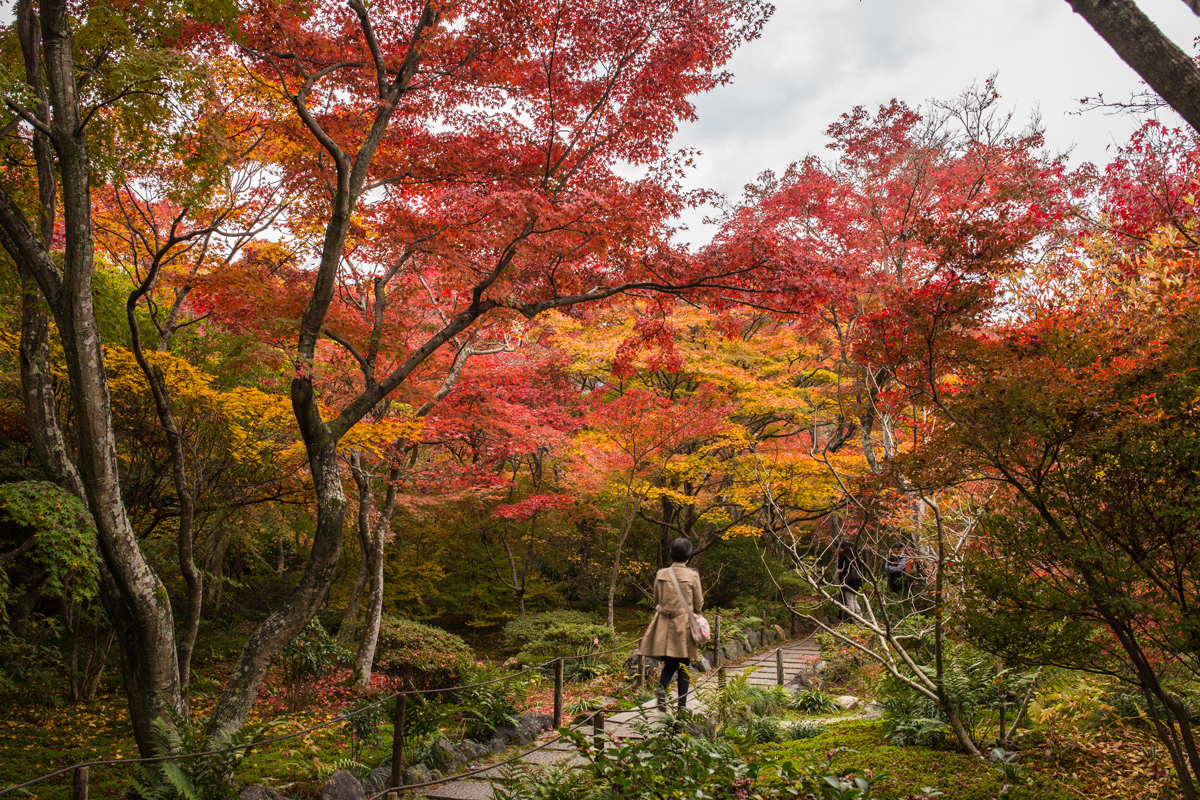 Best Autumn Foliage in Kyoto: Hokyo-in