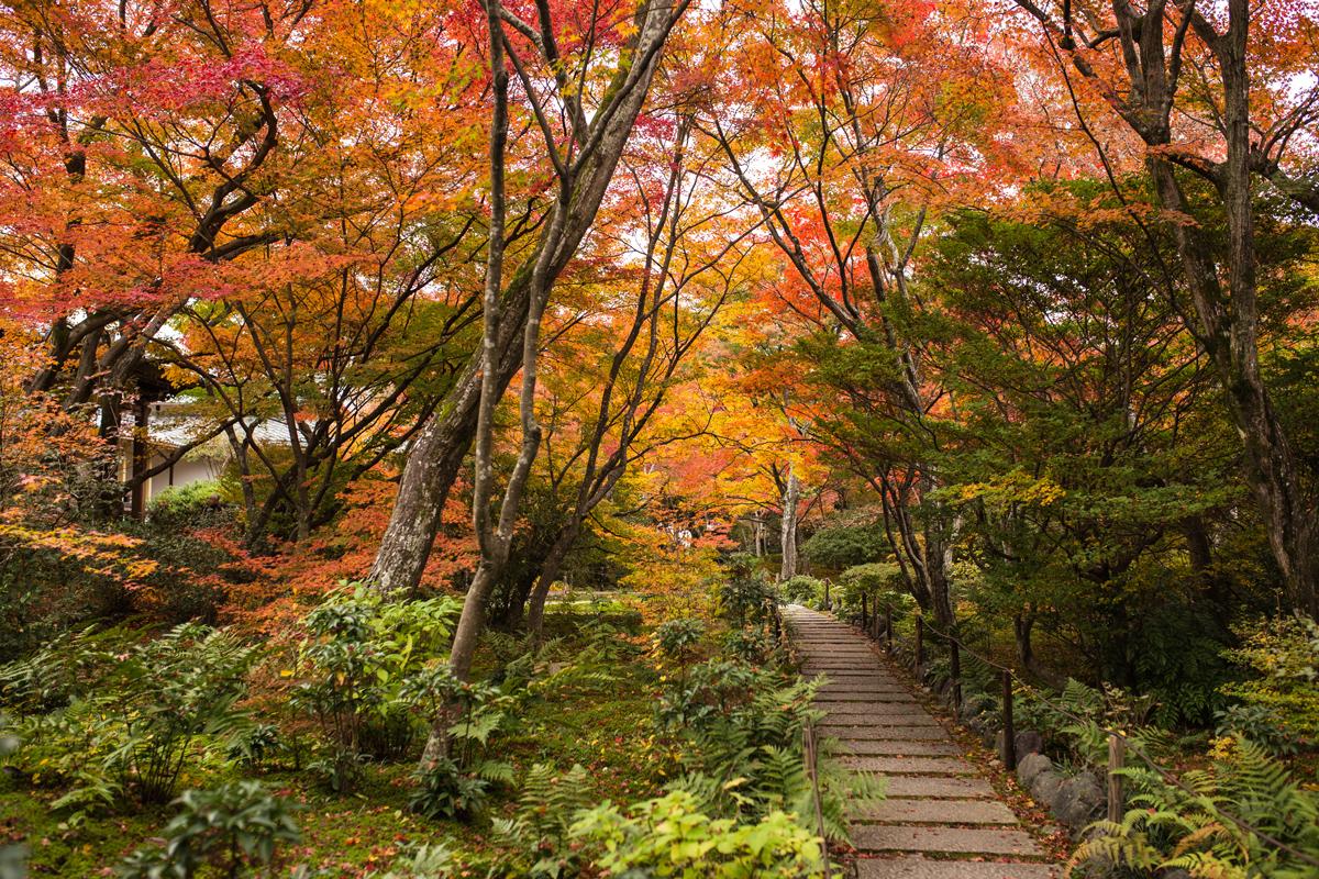 hokyoin-temple-arashiyama