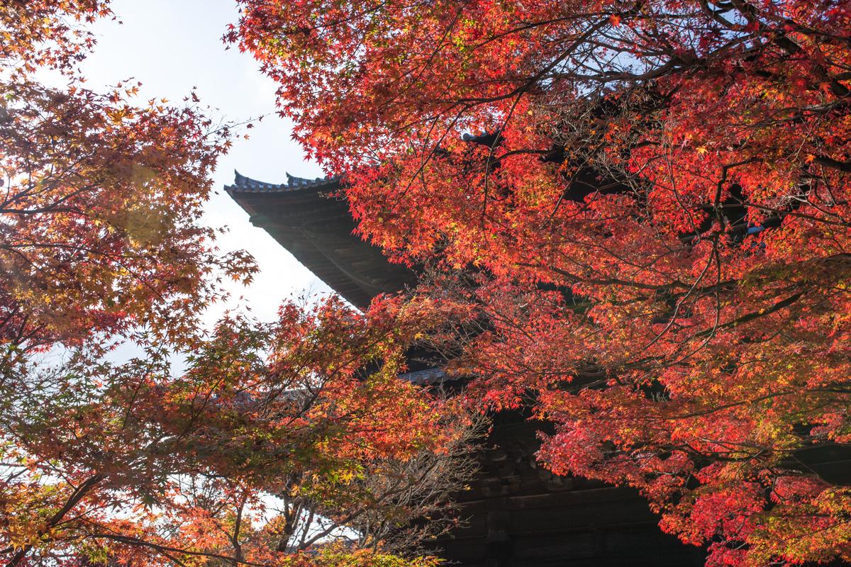 Autumn Foliage in Kyoto: Nanzen-ji