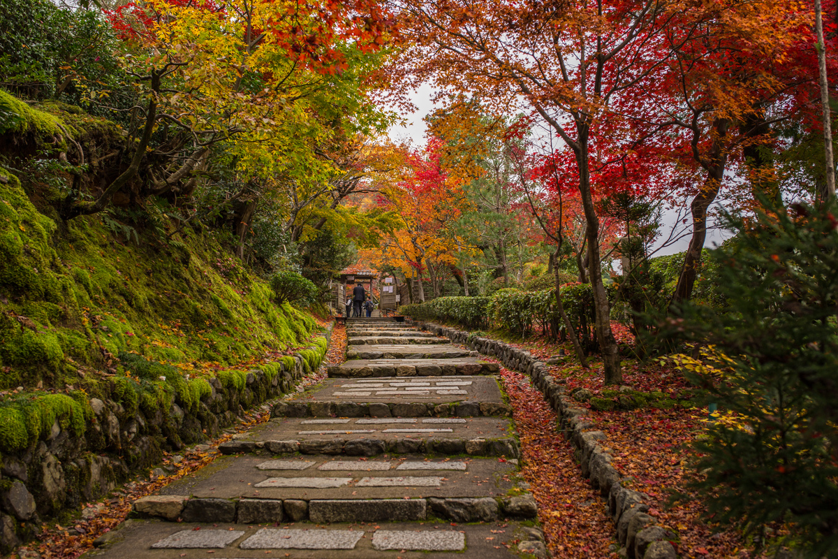 Autumn Foliage in Adashino Nenbutsu-ji