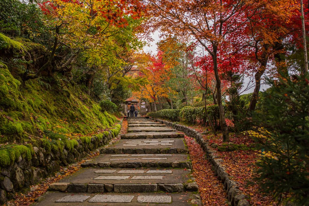 Autumn Foliage in Adashino Nenbutsu-ji