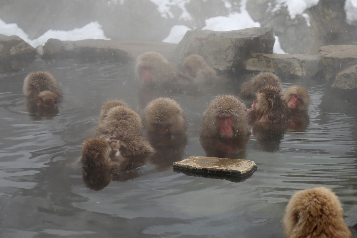 Day Trip to Jigokudani Yaen Koen in Winter