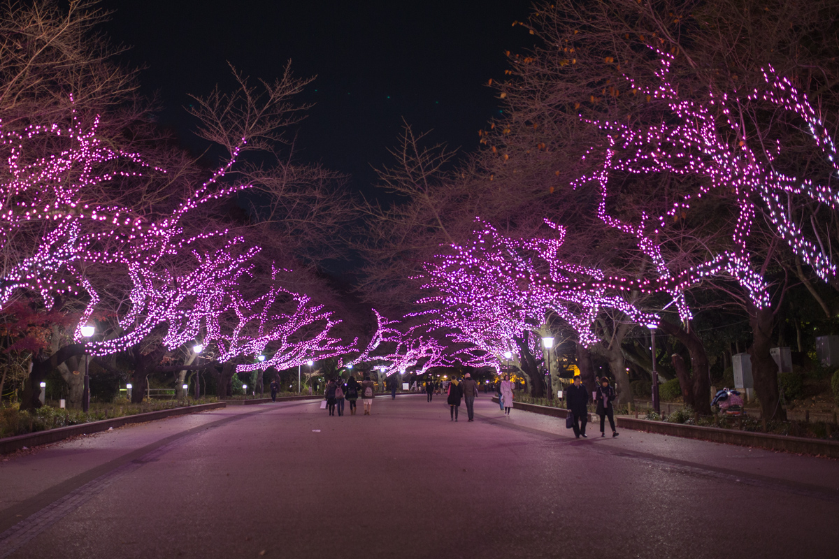 Winter Illumination Ueno Park 2016