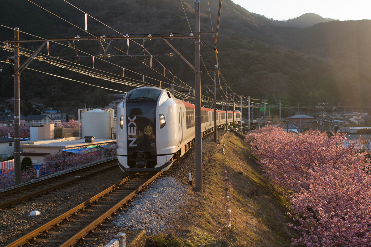 Marine Express Odoriko with Kawazu Cherry Blossoms