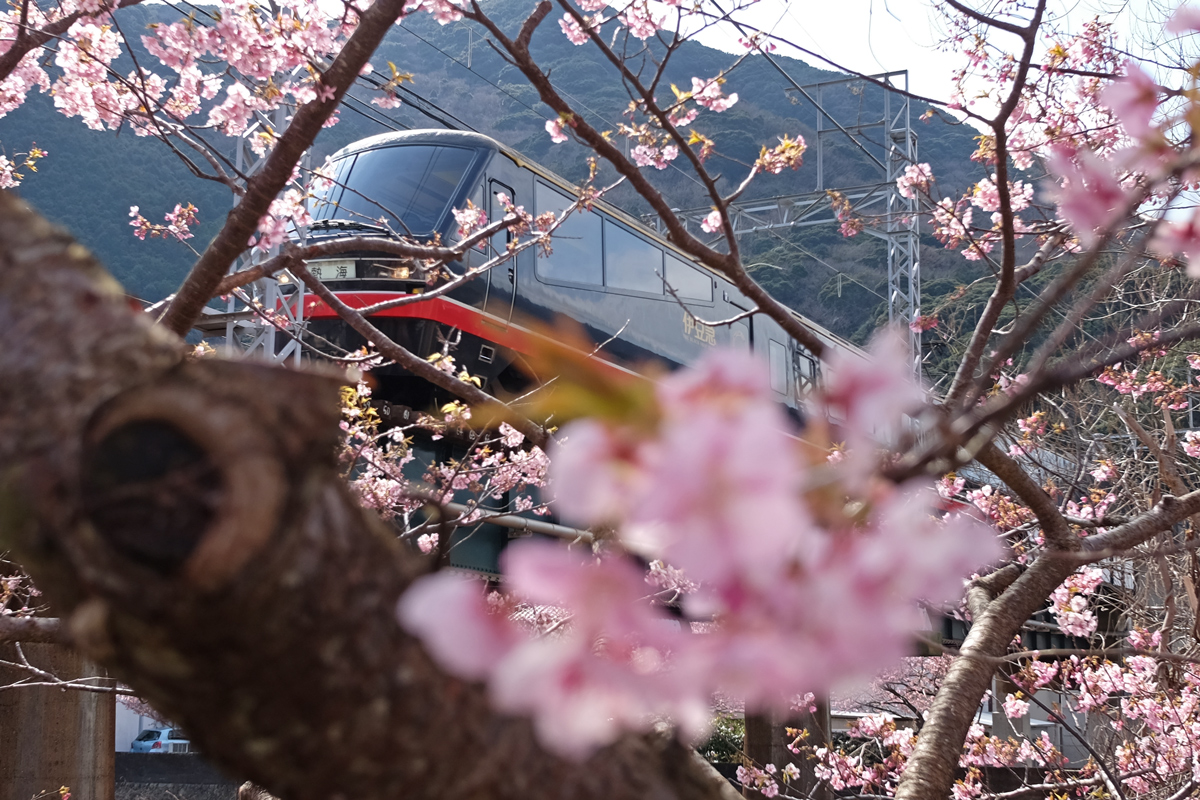 Kawazu Sakura and Kurofune Train