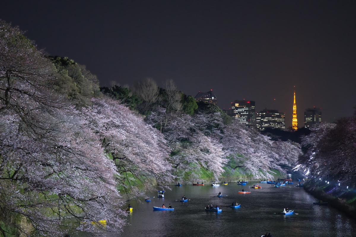 Chidorigafuchi Evening Light Up
