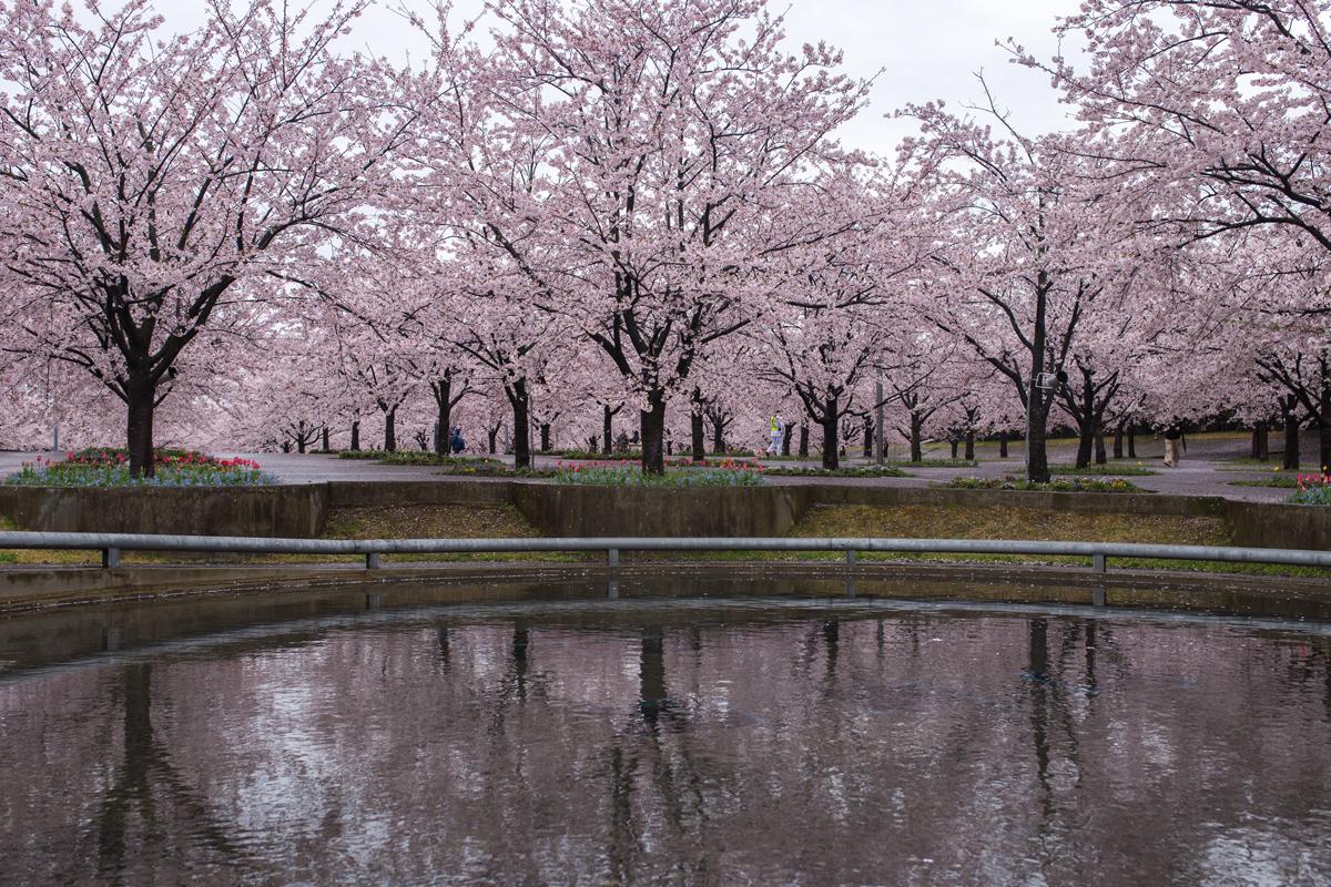 Panasonic Sakura Square Makuhari Chiba