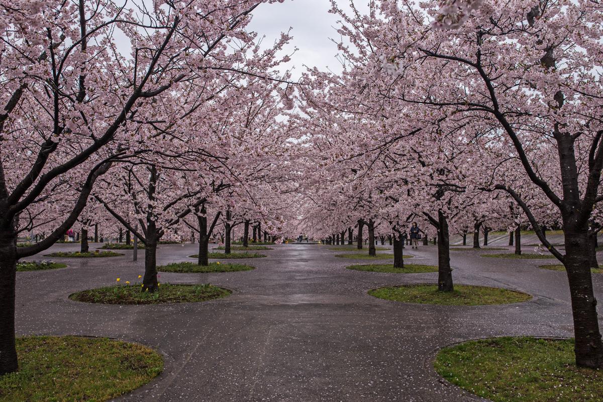 Sakura Hiroba Makuhari