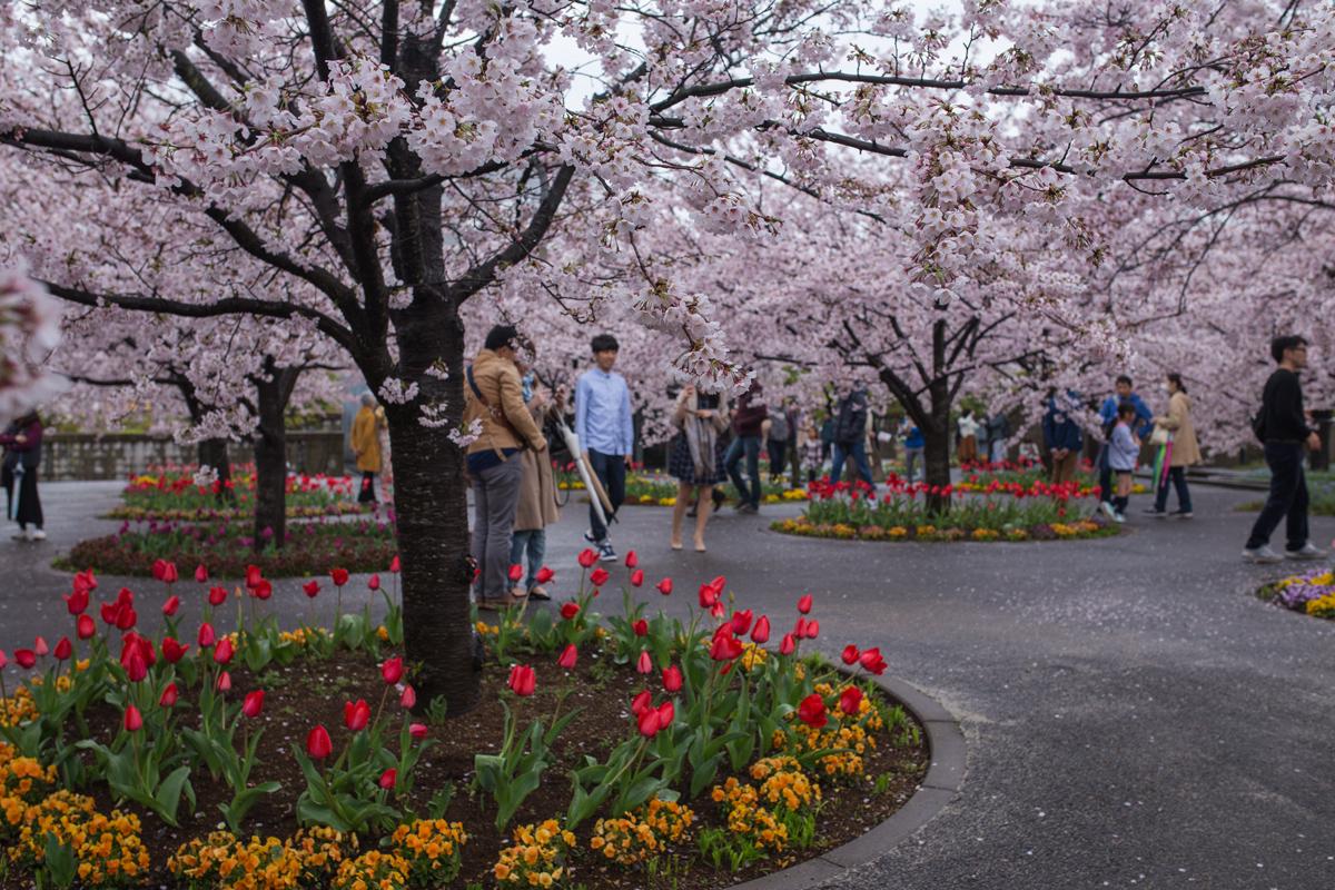 Visitors in Sakura Hiroba Makuhari