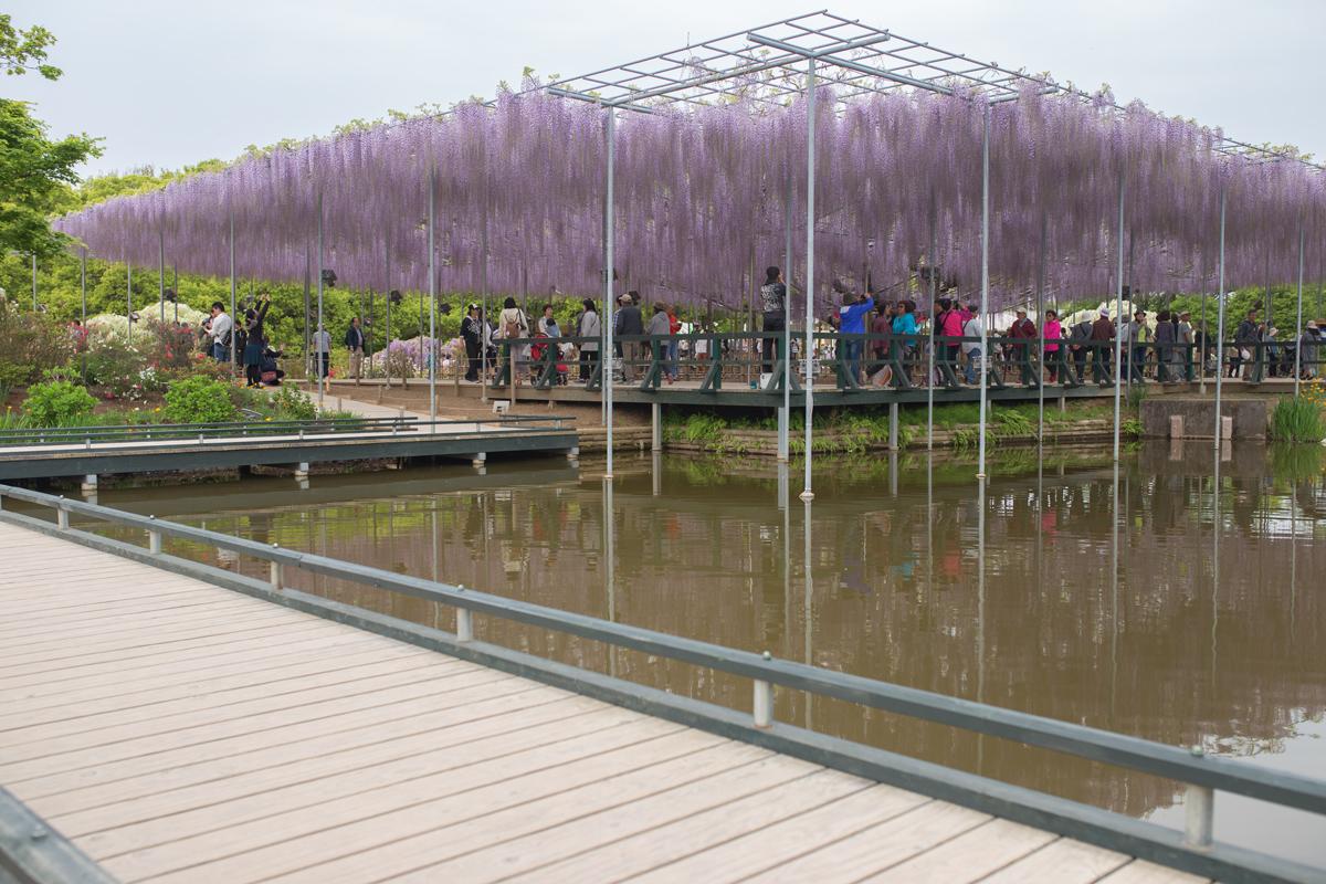 Fujidana Ashikaga Flower Park