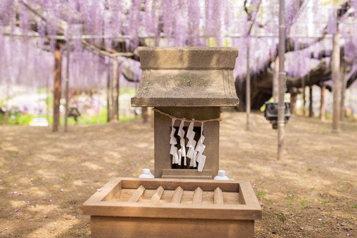 Small Shrine at Ashikaga Flower Park
