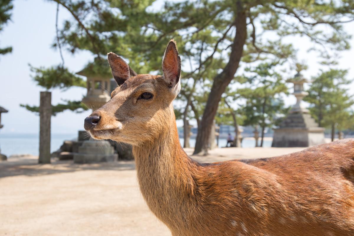 Miyajima Island