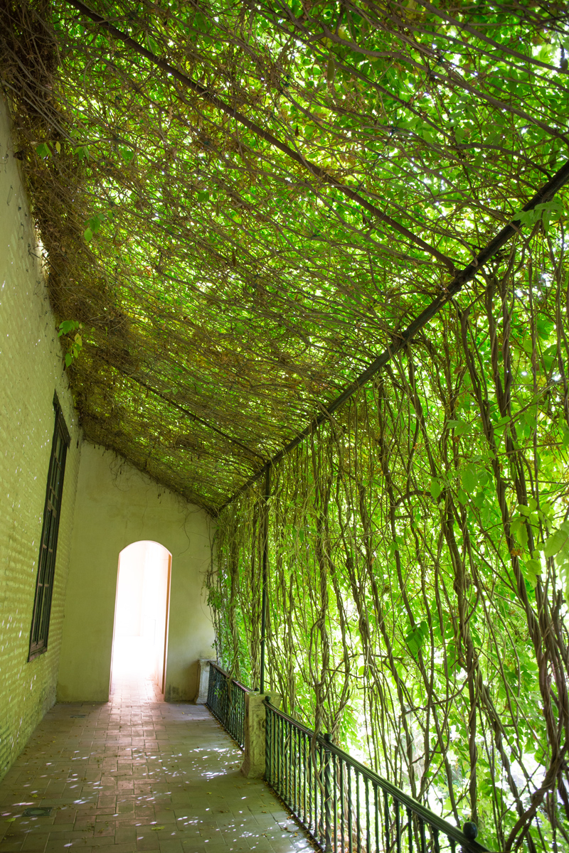 Green-Tunnel-Real-Alcazar