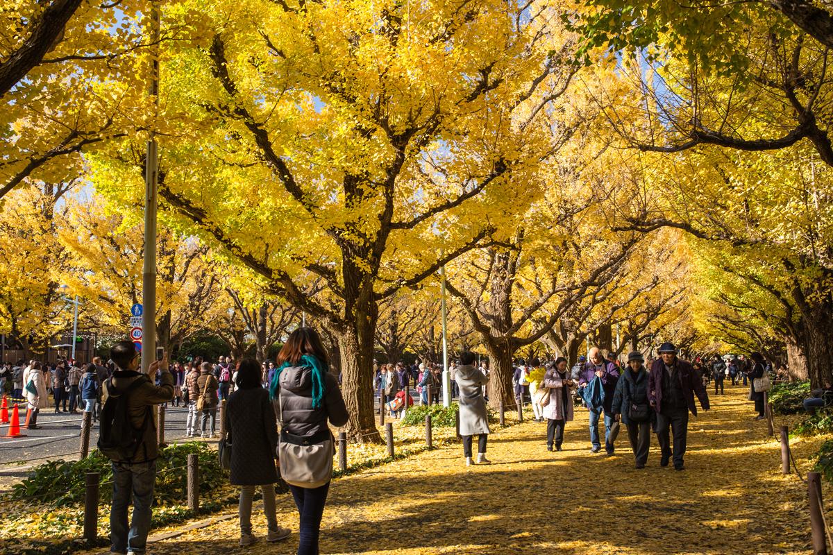 Gaien-mae in Autumn