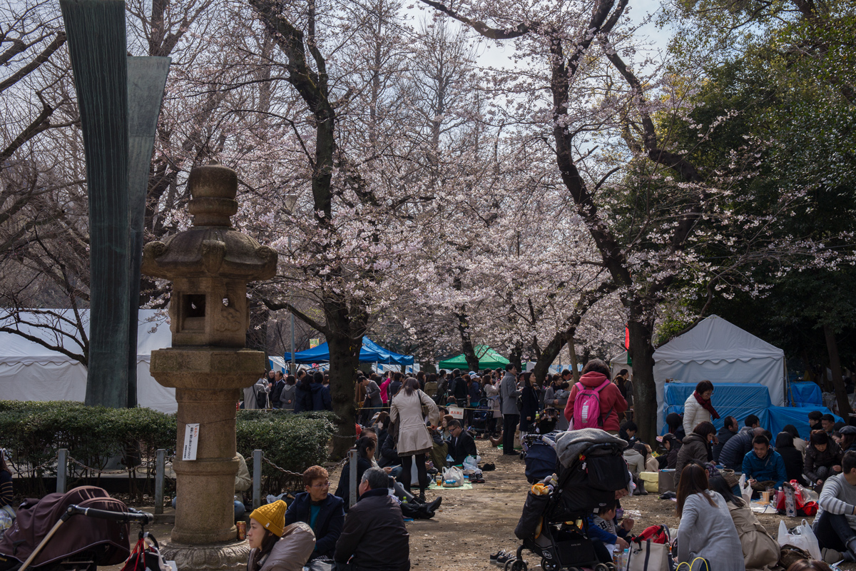 Yasukuni Shrine Hanami