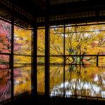 Rurikoin Autumn Kyoto